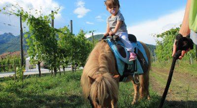 pony-bimba